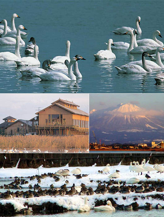Various pictures from Yonago Waterbird Sanctuary,